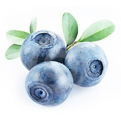 mirtilli neri blueberries